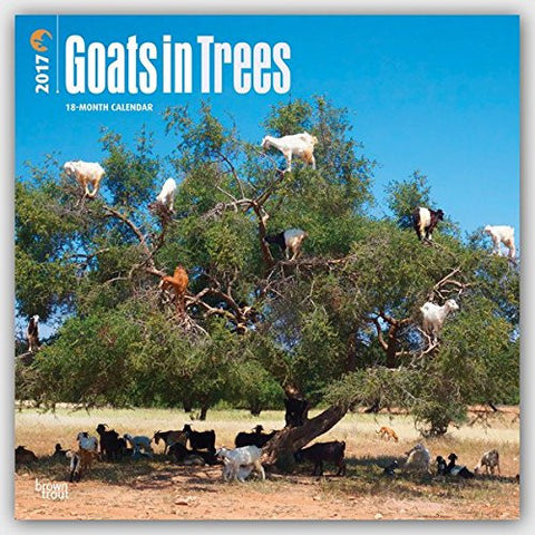 Goats in Trees 2017 Square