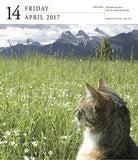 Cat Page-A-Day Gallery Calendar 2017