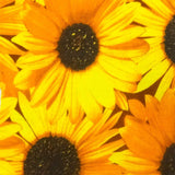Sunflower Packed Poly Cotton Fabric