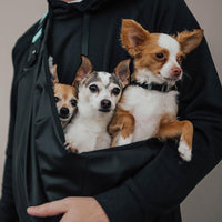 lifestyle photo showing three small and happy dogs inside of the dog carrier being carried by a man