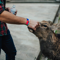 Lifestyle image of someone petting a deer with Please Stand By on their wrist