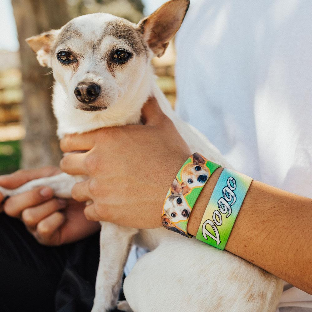 Lifestyle image close up of someone holding a white and brown chihuahua with 2 doggo straps on one wrist