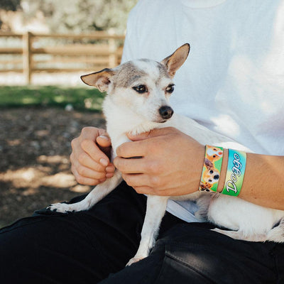 Lifestyle image of someone sitting with a white and brown chihuahua on their lap with 2 doggo straps on one wrist