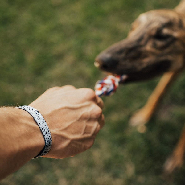 Lifestyle image of hand playing tug of war with a dog while wearing Practice Makes Perfect