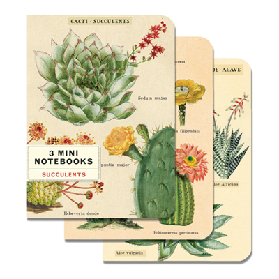 NOTEBOOK SET CH / SUCCULENTS