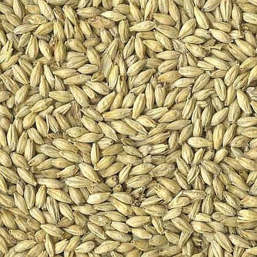 6-Row Brewers Malt (Briess)