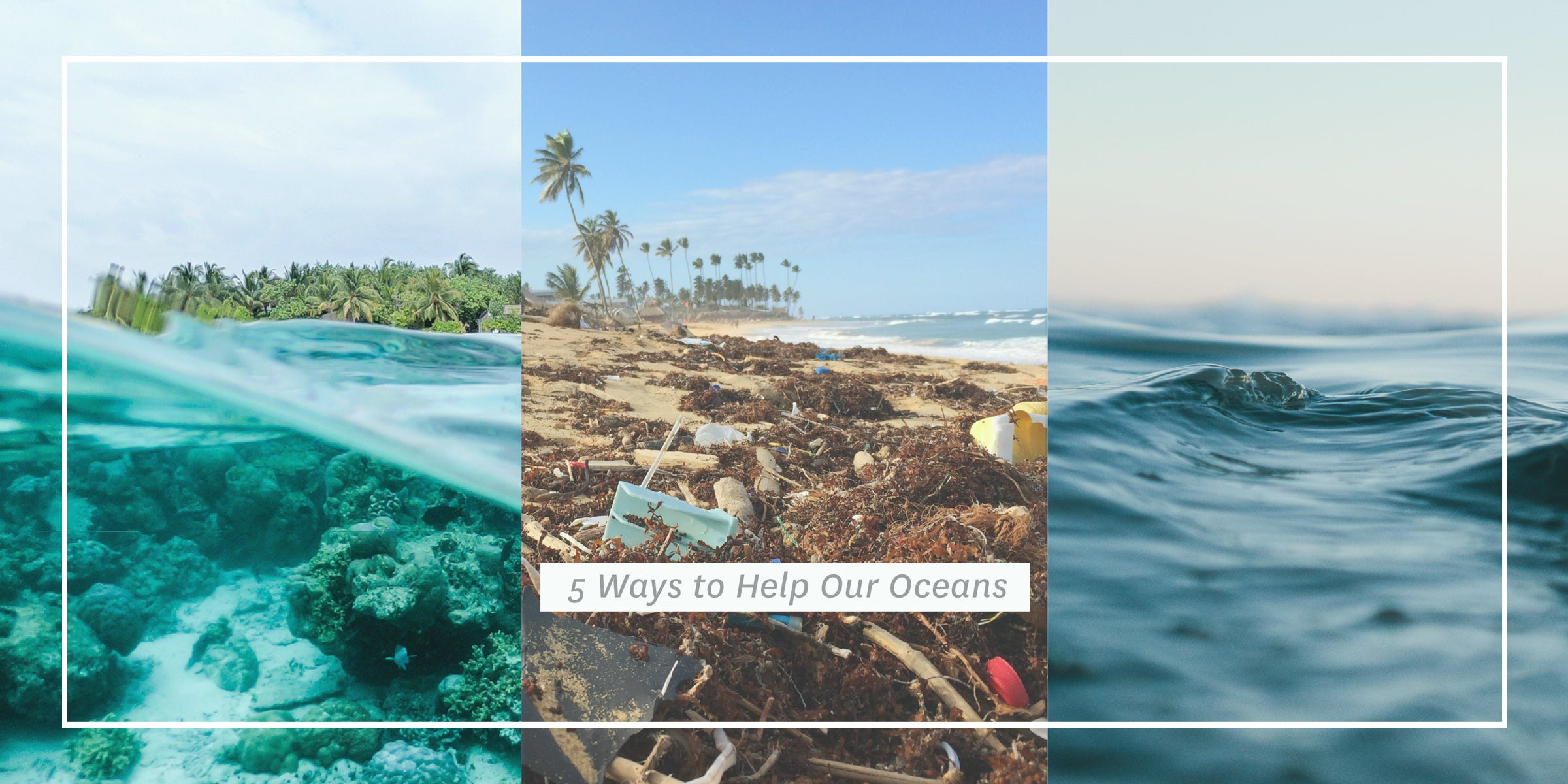 5 Ways to Help Our Oceans