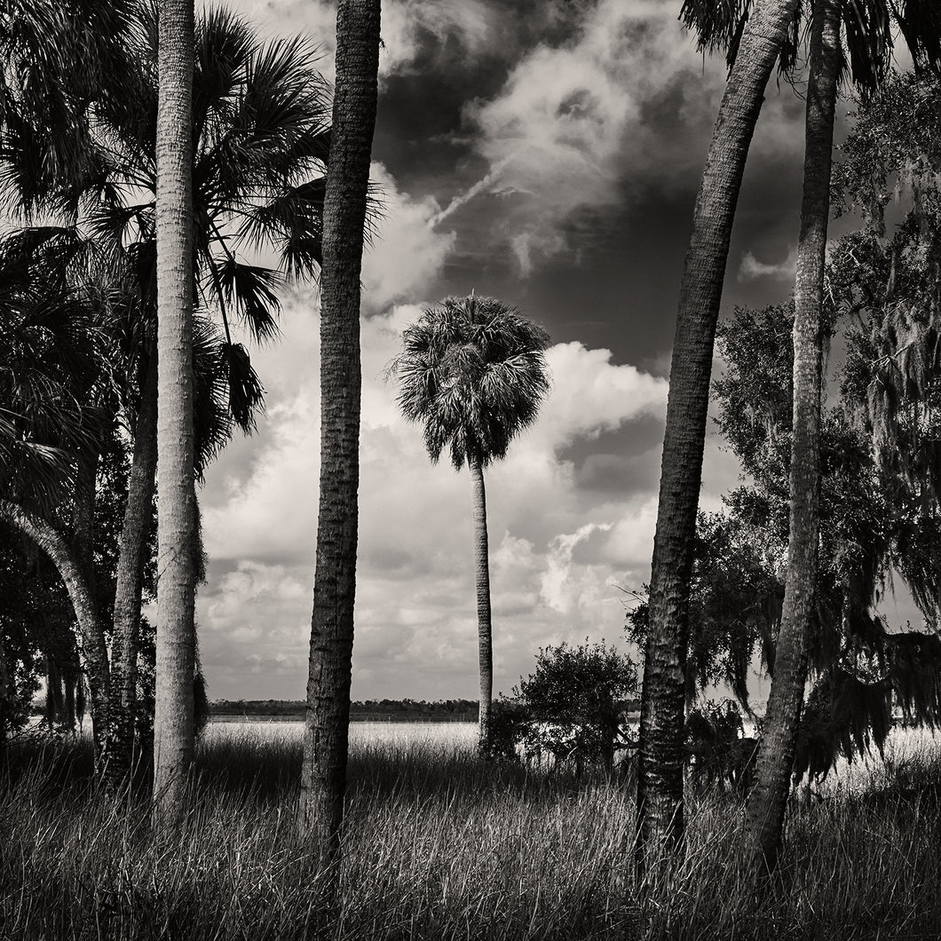 Into Myakka: A Landscape Photography Workshop