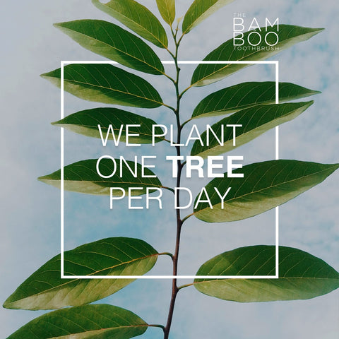 we plan a tree per day - co2 compensated shipping