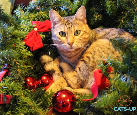 Christmas presents for your cat