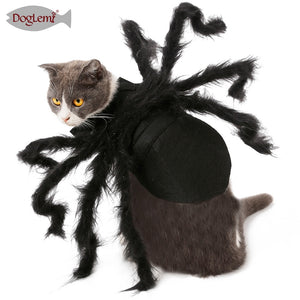 Spider Cat Costume