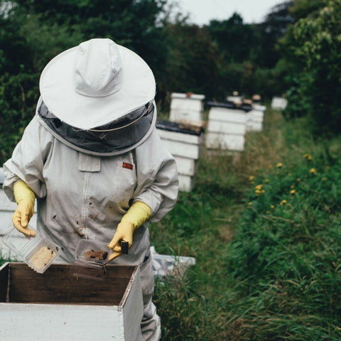 Bee Keeping 101