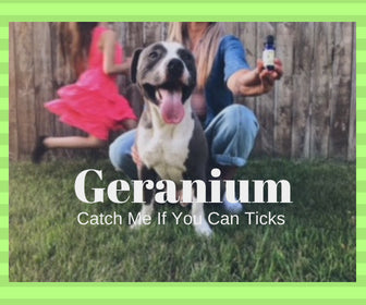 Geranium keeps ticks away