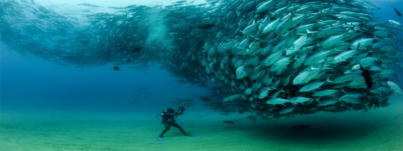 Scuba Diving - DiversDistrict.com
