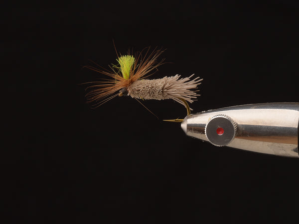 caddis for salmon
