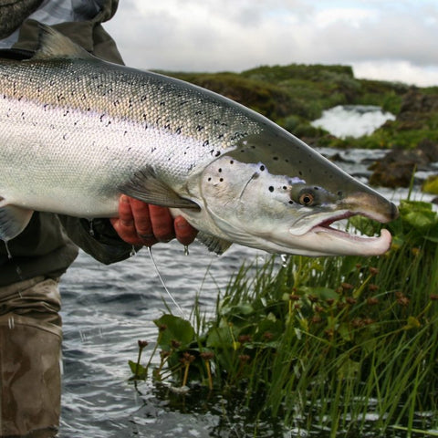 Find the right depth and you'll find your salmon. Pic courtesy of Icelandicflyfishermen.com