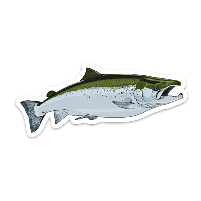 Atlantic Salmon decal