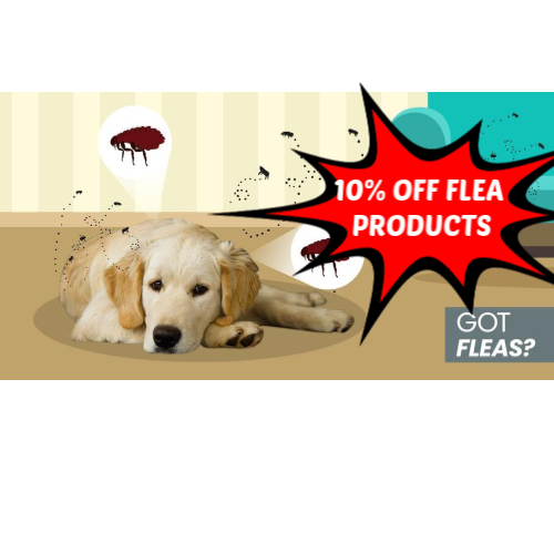 Flea season is coming! Watch out!