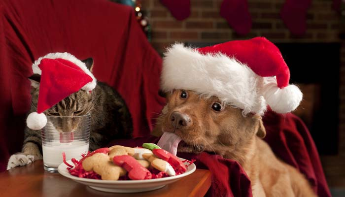 Dangerous Christmas Food for Pets