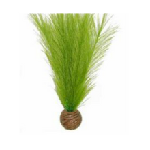 Superfish Easy Plants Middle 20cm (Different Styles Available)