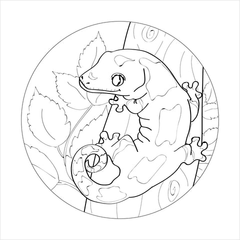 Chahoua Colouring Page (Digital Download) , Reptile Edge, Reptile Edge - Reptile Edg,