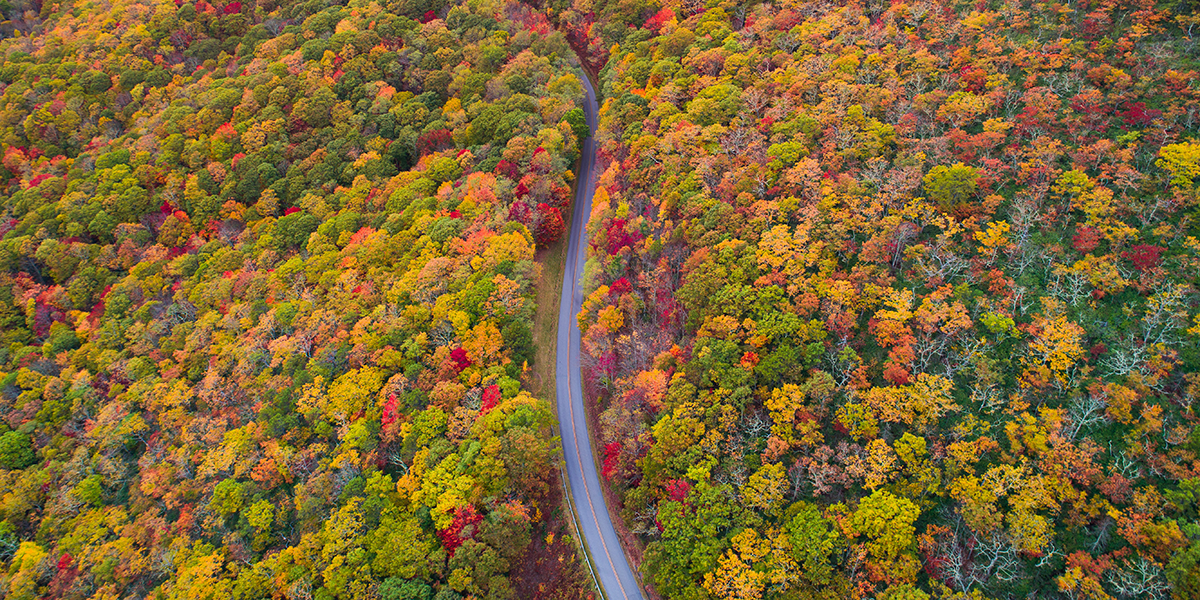 130 different species of trees all along the Blue Ridge Parkway