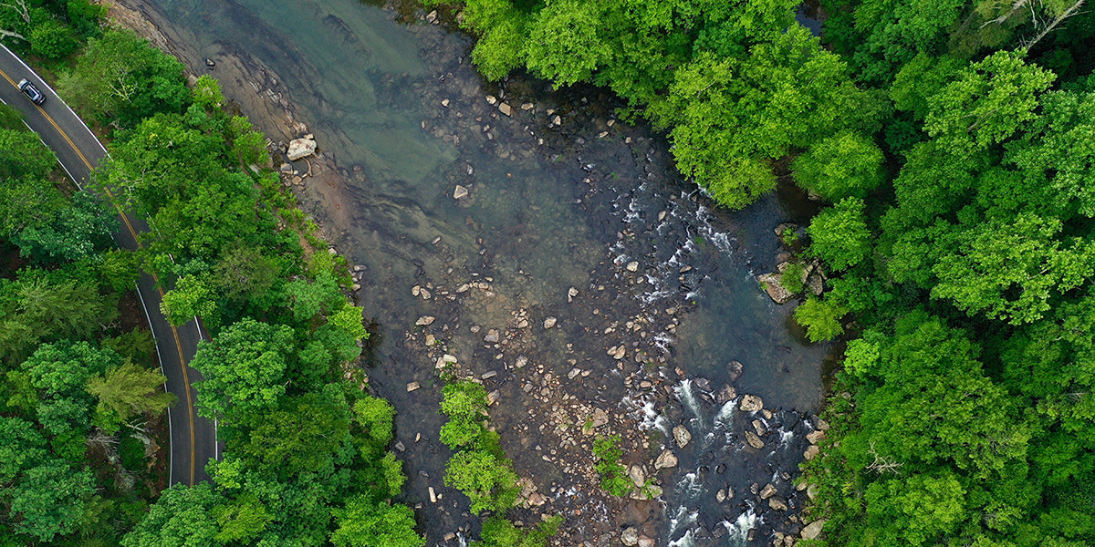drone shot of lush forest and river