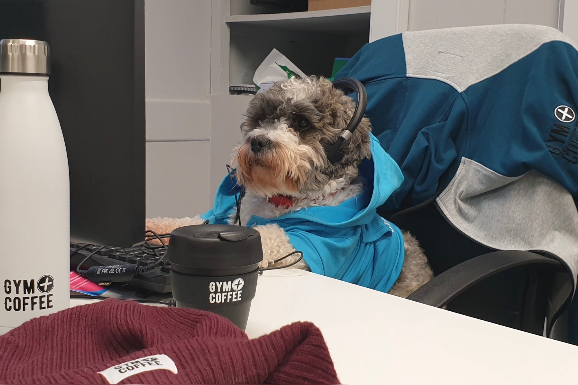 Gym+Coffee Office Dog Ned