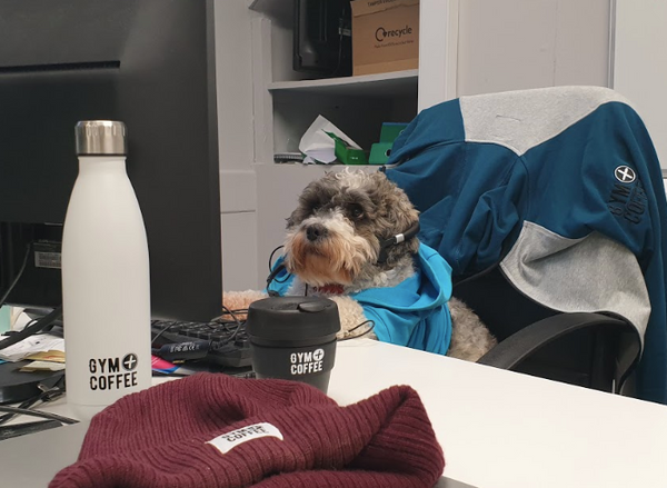 Top Customer Service Dog Ned