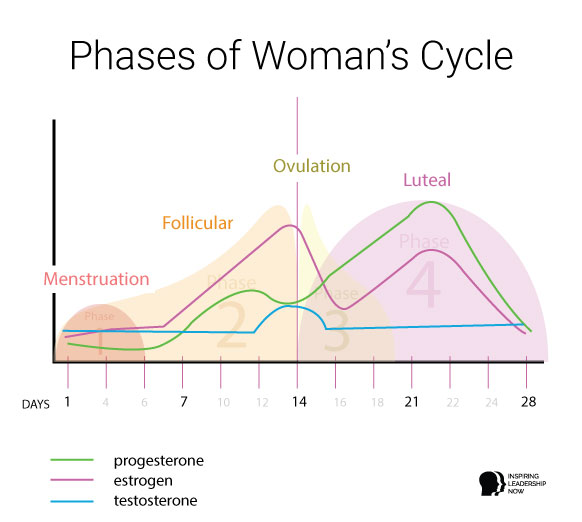 phases-of-a-womans-cycle-hormone-graph
