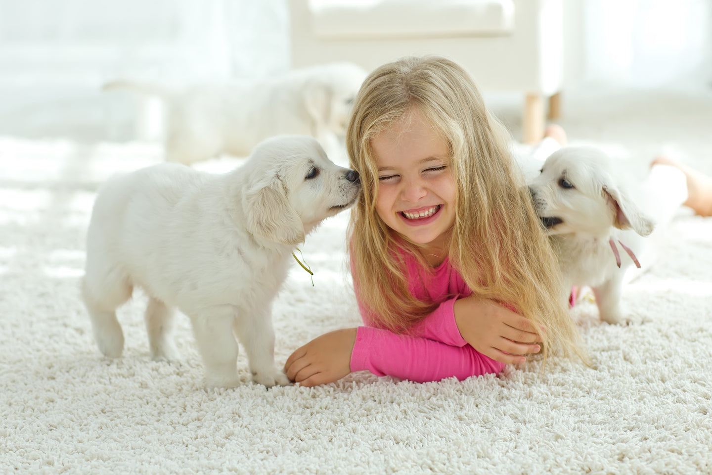 Green non toxic carpet cleaning services in Michigan