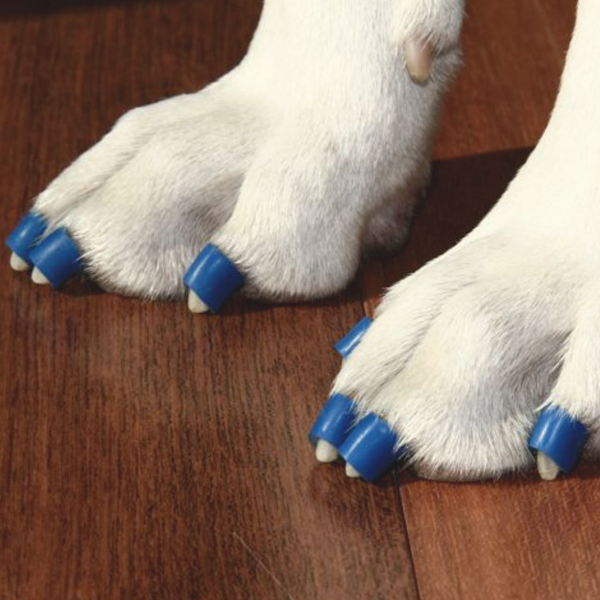 Dr Buzby S Toegrips For Dogs Dog Toenail Grips Dr Buzby S