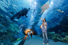 Dubai Aquarium & Underwater Zoo has everything to keep the entire family happy.  Children below 3 years of age are free of charge!!  The 10-million litre Dubai Aquarium tank, located on the Ground Level of The Dubai Mall, is the largest suspended aquariums in the world.  It houses thousands of aquatic animals, comprising over 140 species. Over 300 sharks and rays live in this tank, including the largest collection of Sand Tiger sharks in the world.  There are numerous ways for visitors to experience the mai