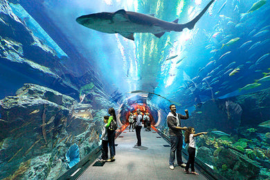 Underwater tunnel under a huge shark- & ray-filled tank, plus a creepy crawly zone with snakes. Dubai Underwater Zoo Tickets and Dhow Cruise Combo is best for people looking for adventure in dubai. Dubai Marina Cruise, Dubai Canal Cruise and Dubai Creek Cruise