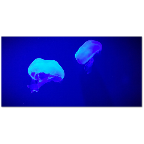 Jellyfish, Kansas City Aquarium