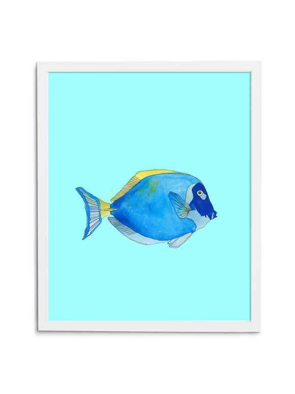 Regal Tang—Blue - Wee Wild Ones - Art Prints