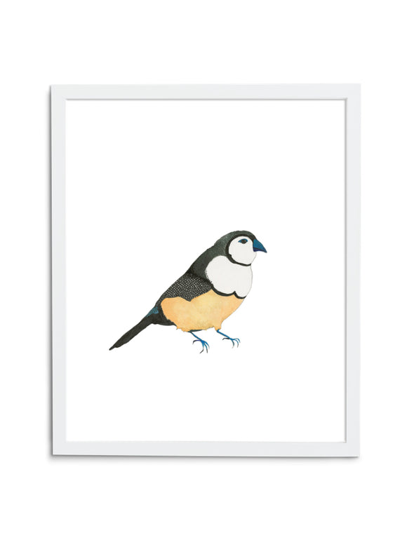 White Finch Art Print in White Frame