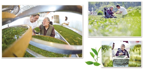 Cai Rui Gui, Tea Master and Senior Agronomist over seeing production