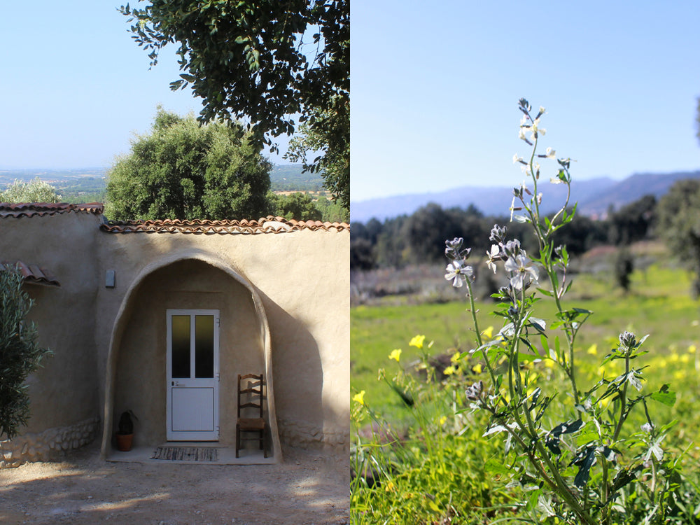 Maison de Base - A front door of a house with a chair and cactus. A flower in a field.