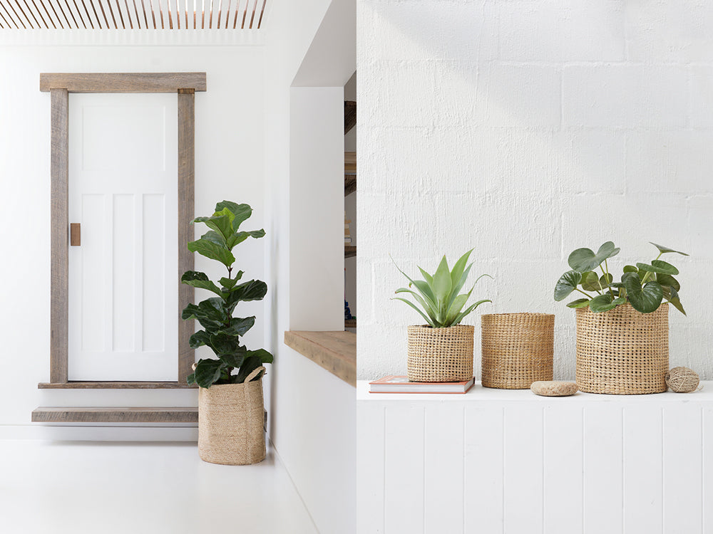 Entryway with plant in jute plant basket. Entryway table with plants in woven jute baskets.