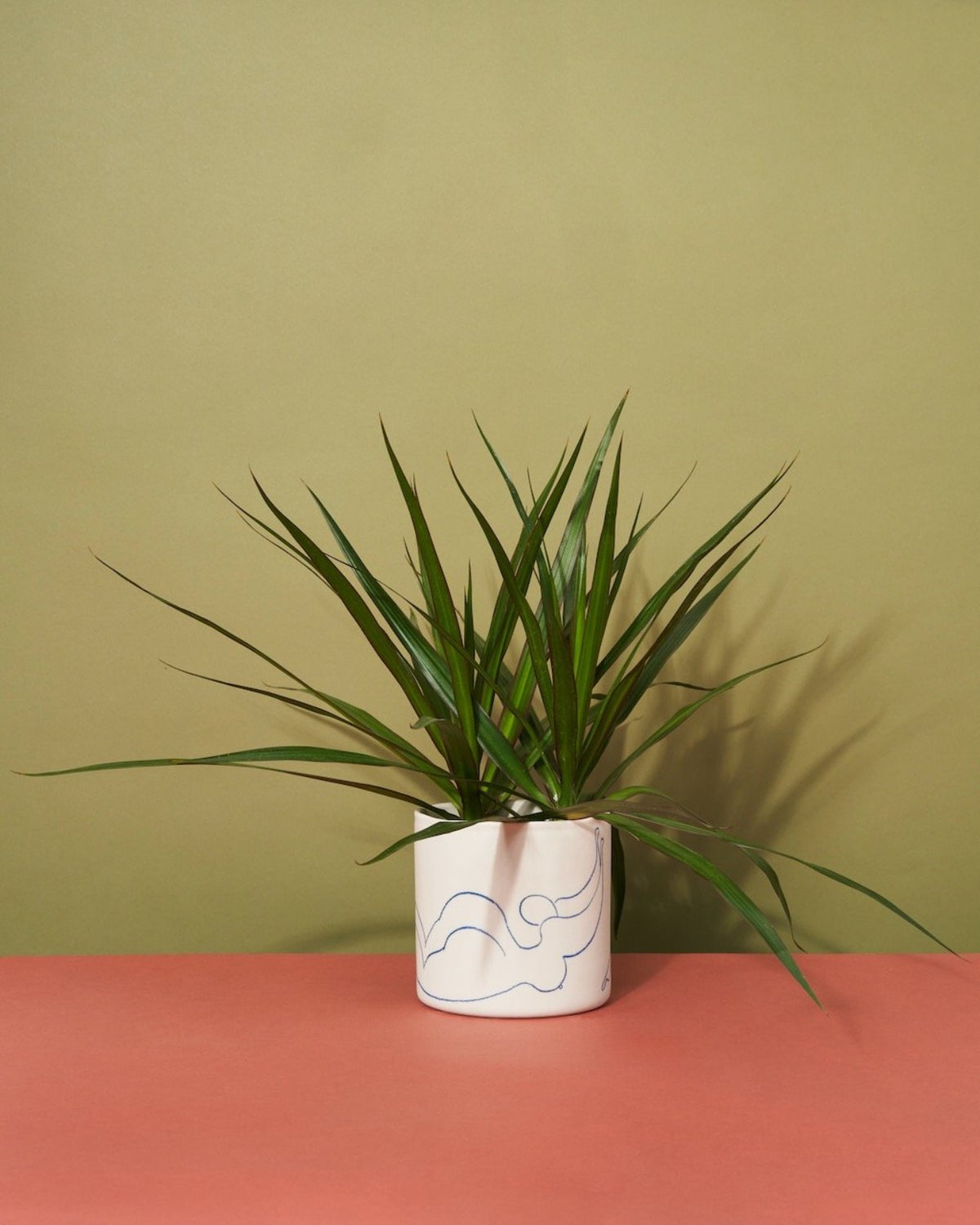 Like a Sister | Potted Plant Gift