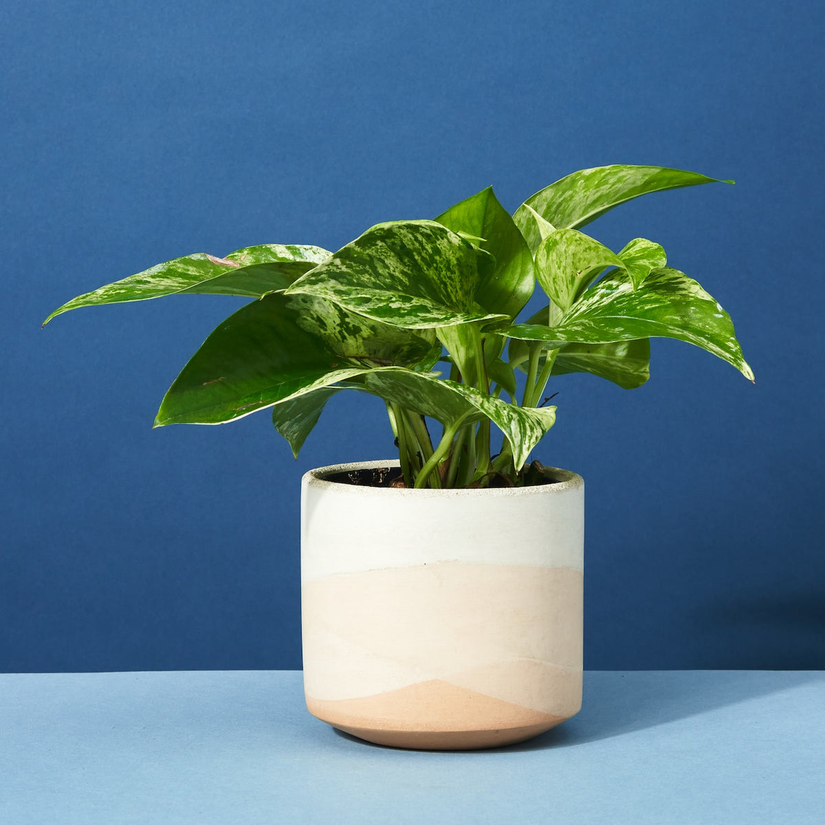 Thinking of You | Potted Plant Gift