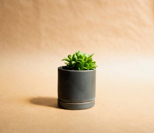 Small Tabletop Planter