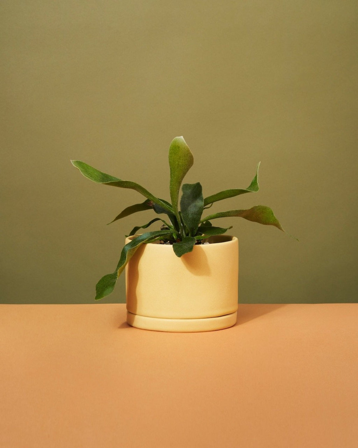 This is Major | Potted Plant Gift