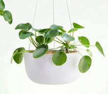 Raw Earth Hanging Planter LARGE