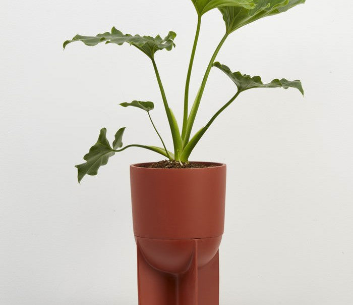 Tall Eros Planter - Terracotta