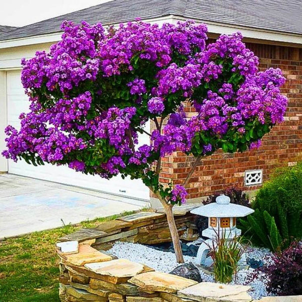 Living Memorial Tree With Biodegradable Burial Urn By
