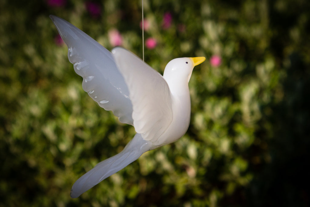 white dove with cremains