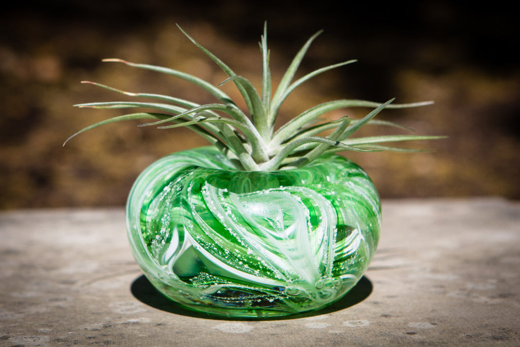 Medium Air Plant Memorial Planter with Cremains - Botanical | $139.00