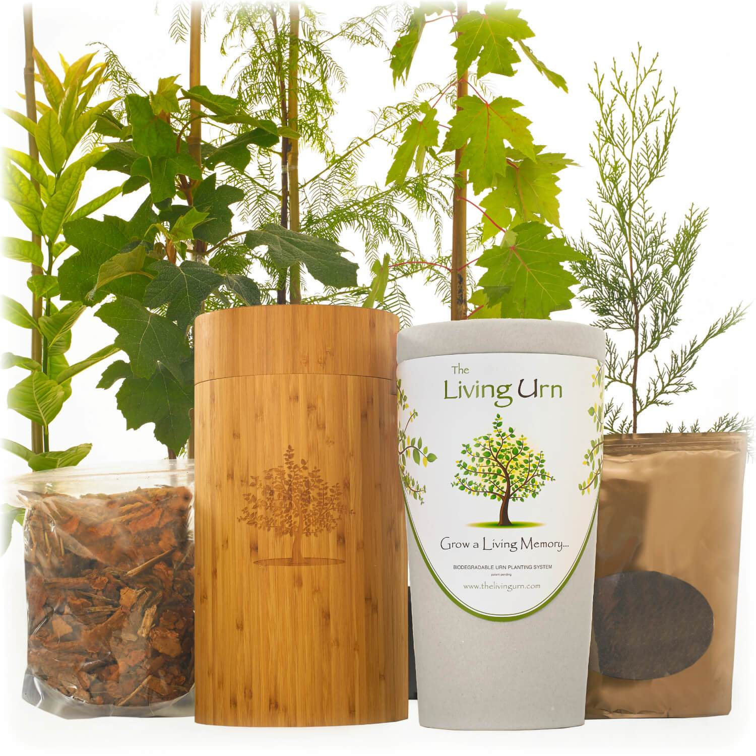 living memorial tree with biodegradable burial urn by living urn